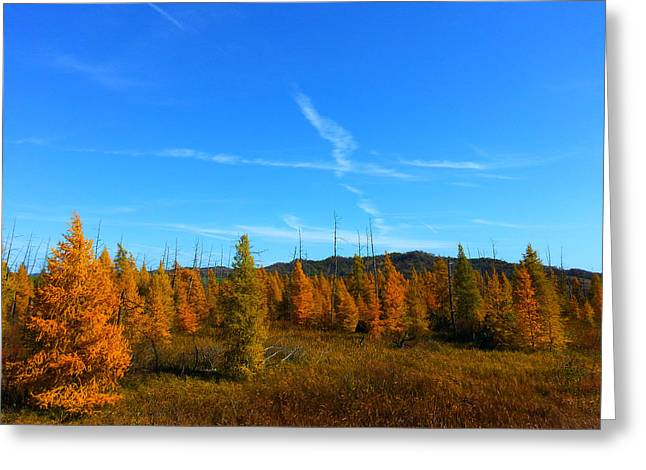 Fall Trees Greeting Cards - Hemlock Creek Greeting Card by Brook Burling