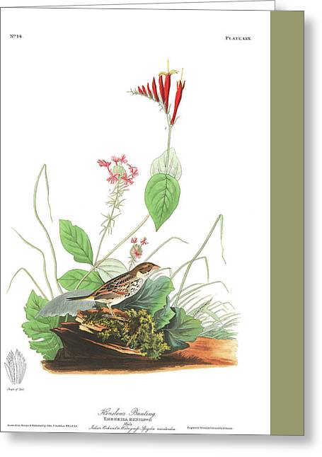 Little Birds Greeting Cards - Henslows Bunting  Greeting Card by John James Audubon