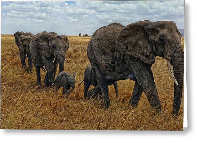 Family Love Greeting Cards - Herd of Elephants on the Serengeti Greeting Card by Ludi