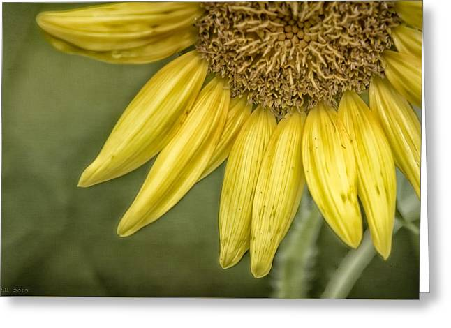 Yellow Sunflower Greeting Cards - Here Comes The Sun Greeting Card by Louise Hill