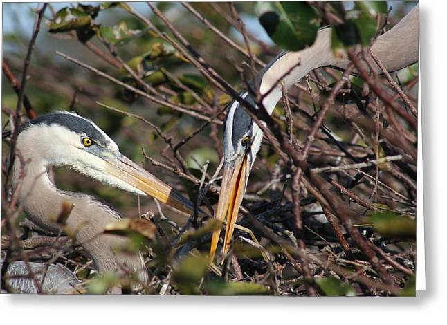 Period Pyrography Greeting Cards - Herons In Love Greeting Card by Valia Bradshaw