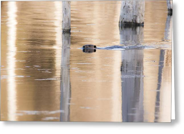 Reflections In River Greeting Cards - Hiding in Plain Sight Greeting Card by Tracy Winter
