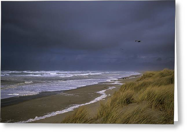 Winter Storm Greeting Cards - High Surf Greeting Card by Robert Potts