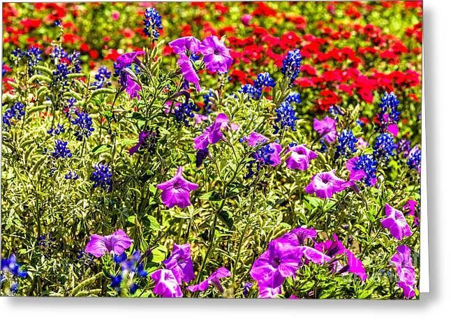 Wildseed Greeting Cards - Hill Country in Bloom Greeting Card by Thomas R Fletcher