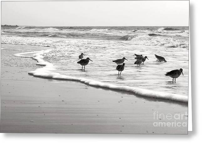 Plundering Plover Series In Black And White 6 Greeting Card by Angela Rath