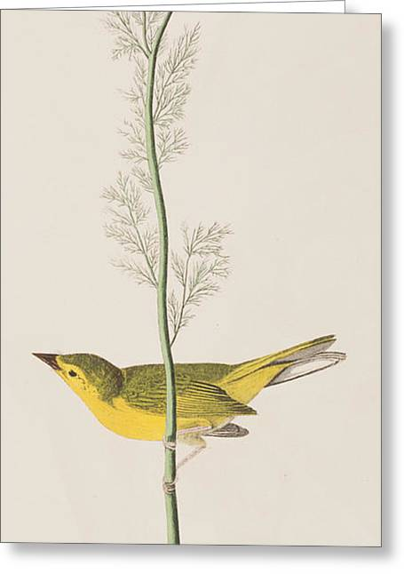 Warblers Greeting Cards - Hooded Warbler Greeting Card by John James Audubon
