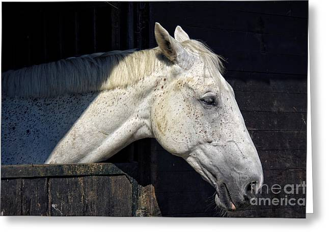 Horse Images Greeting Cards - Horse Greeting Card by Angela Doelling AD DESIGN Photo and PhotoArt