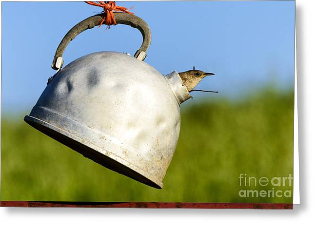 Abandonment Greeting Cards - House wren in Tea Kettle Home Greeting Card by Thomas R Fletcher