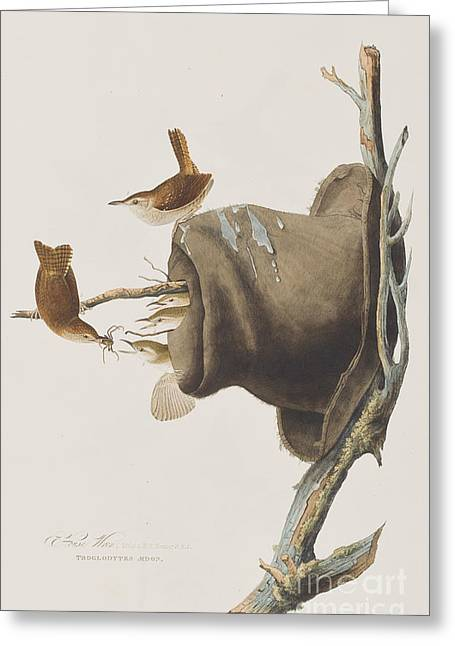 Wren Greeting Cards - House Wren Greeting Card by John James Audubon