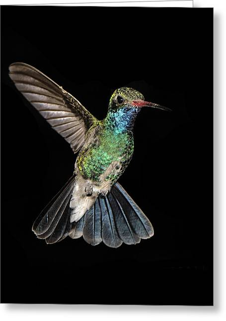 Hovering Greeting Cards - Hovering Hummer Greeting Card by Jean Noren