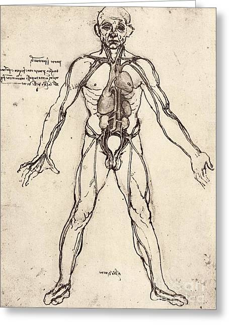 Historical Images Greeting Cards - Human Venous System Greeting Card by Sheila Terry