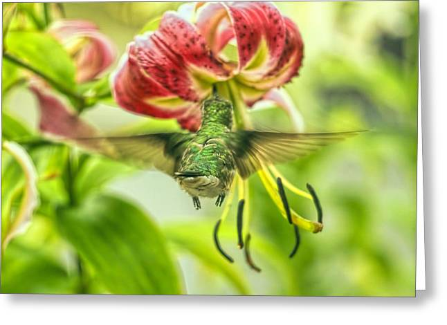 Florescent Lighting Greeting Cards - Hummingbird And Pendant Flower Greeting Card by Geraldine Scull