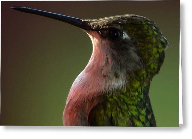 Hummingbird Greeting Card by Brian Stevens