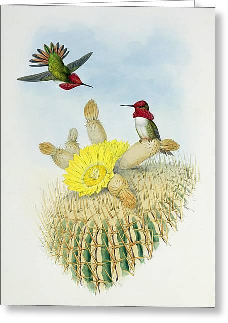 Hummingbirds Greeting Card by John Gould
