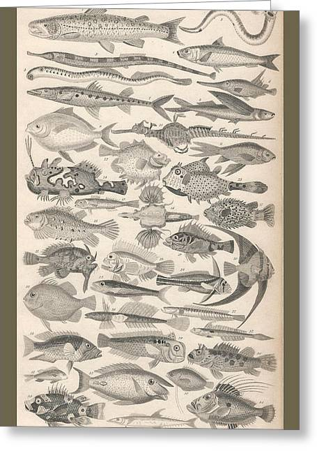 Ichthyology Greeting Card by Captn Brown