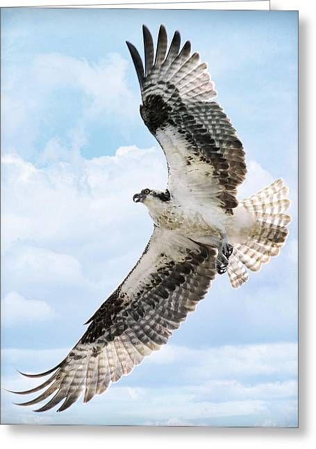 Soaring Falcon Greeting Cards - In Flight Greeting Card by Athena Mckinzie