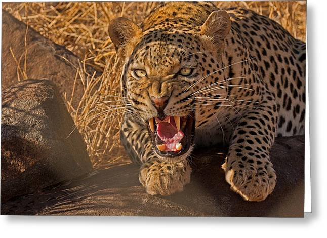Fangs Greeting Cards - In No Uncertain Terms Greeting Card by Ashley Vincent
