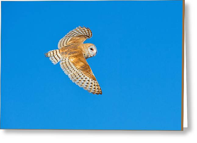 Flying Animal Greeting Cards - Into the Blue Greeting Card by Scott Warner