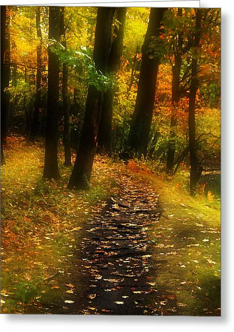 New England Fall Shots Greeting Cards - Into the Woods Greeting Card by William Carroll