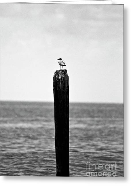 Seabirds Greeting Cards - Its a Big World Greeting Card by Scott Pellegrin