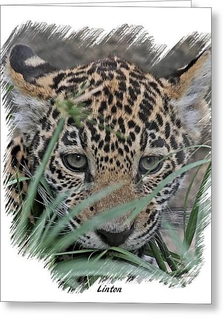 Jaguars Greeting Cards - Jaguar Cub Greeting Card by Larry Linton