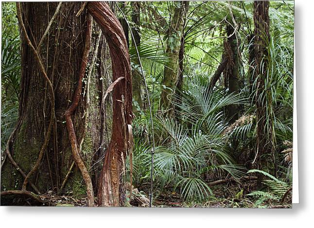 Tropical Photographs Greeting Cards - Jungle vines Greeting Card by Les Cunliffe