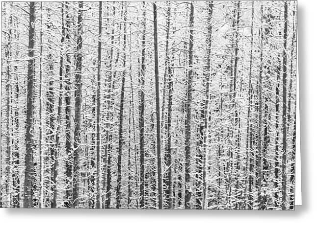 Binh Greeting Cards - Kananaskis Country Winter Snow Canadian Rockies Greeting Card by Binh Ly