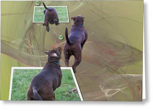 Chocolate Lab Greeting Cards - Keep Your Eye On The Ball Greeting Card by Roger Wedegis