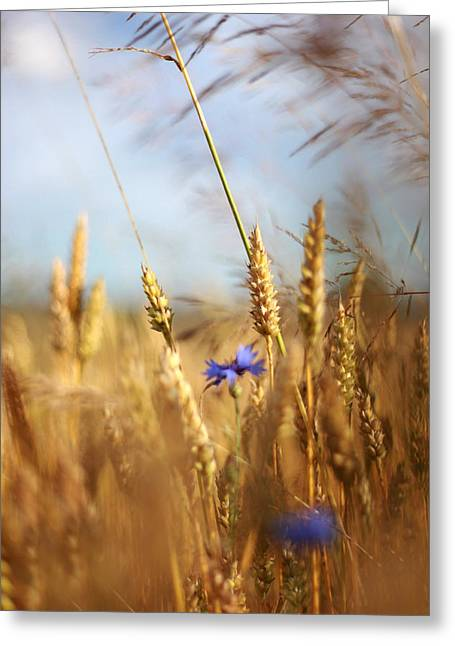 Photografie Greeting Cards - Kornblumen Greeting Card by Renata Vogl