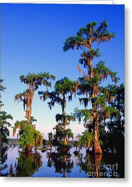 Acadian Greeting Cards - Lake Martin Cypress Swamp Greeting Card by Thomas R Fletcher
