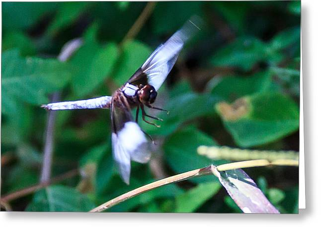 Flying Animal Greeting Cards - Landing Greeting Card by Dennis Wells