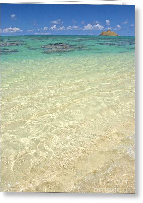 Recently Sold -  - Ocean Shore Greeting Cards - Lanikai Coral Head Greeting Card by Tomas del Amo - Printscapes