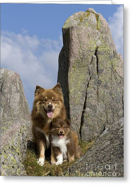 Watchdog Greeting Cards - Lapinkoïra Dog And His Pup Greeting Card by Jean-Louis Klein & Marie-Luce Hubert