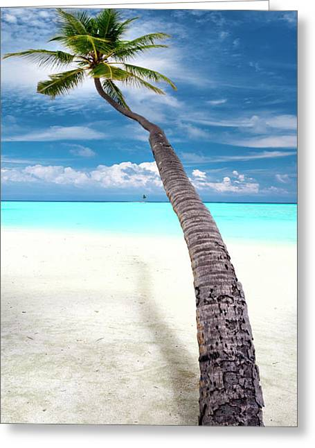 Leaning Palm Greeting Card by Sean Davey