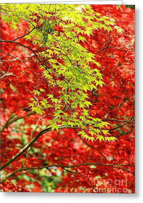 Red Leaves Greeting Cards - Leaves Greeting Card by HD Connelly
