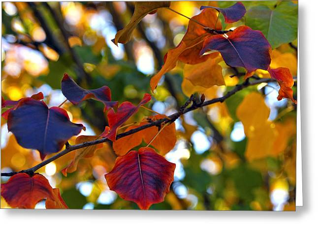 Red Leaves Greeting Cards - Leaves of Autumn Greeting Card by Stephen Anderson