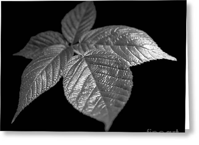 Leaves Greeting Card by Tony Cordoza