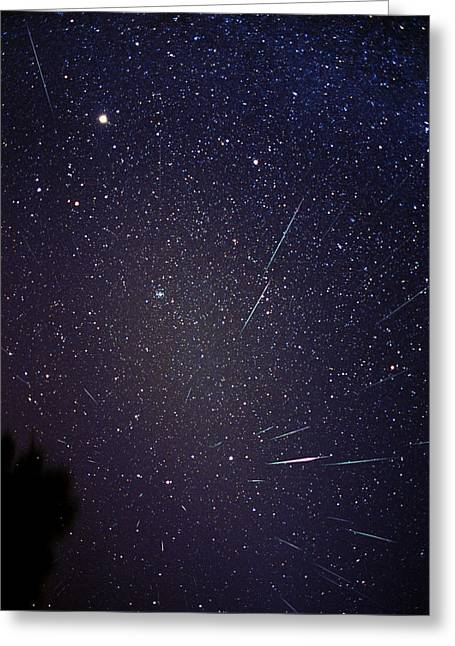 Constellations Greeting Cards - Leonid Meteors Greeting Card by Dr Fred Espenak