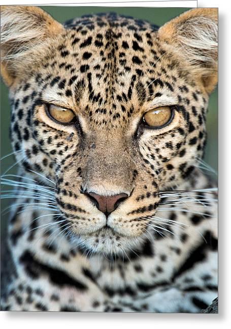 Leopard Panthera Pardus, Ndutu Greeting Card by Panoramic Images