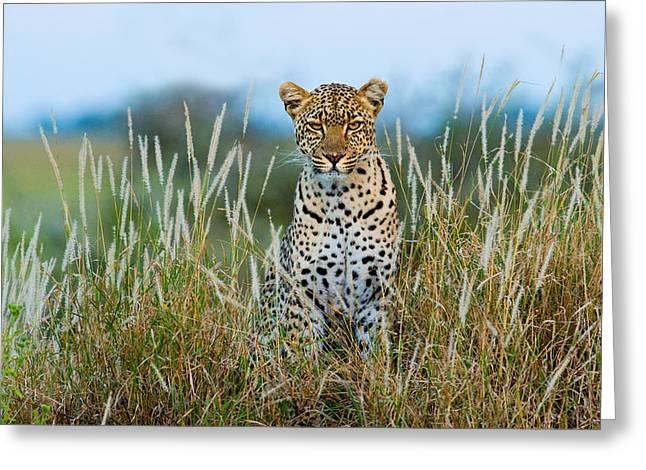 Leopard Panthera Pardus, Serengeti Greeting Card by Panoramic Images
