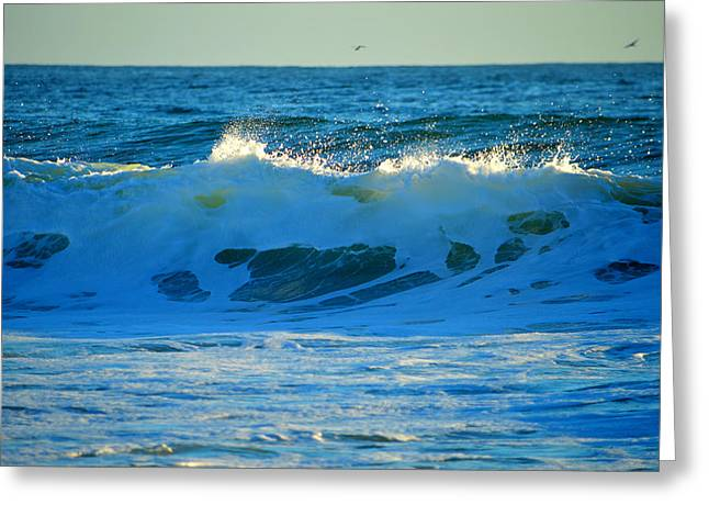 Aquatic Greeting Cards - Light of Morning Greeting Card by Dianne Cowen