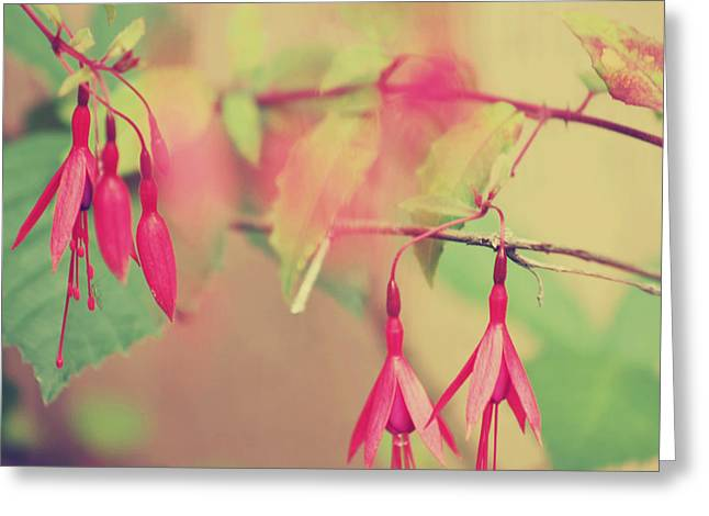Fushia Greeting Cards - Lightly Pink Greeting Card by Kerry Langel