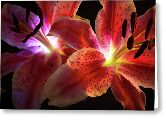 Lilly 001 Greeting Card by Bobby Villapando