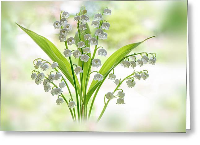 Lily Of The Valley Greeting Card by Jacky Parker