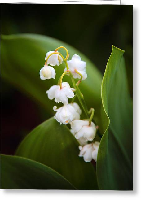 Lily Of The Valley Greeting Card by Jessica Jenney