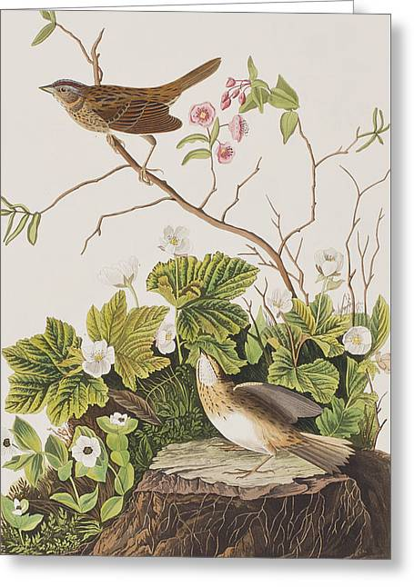 Finch Greeting Cards - Lincoln Finch Greeting Card by John James Audubon