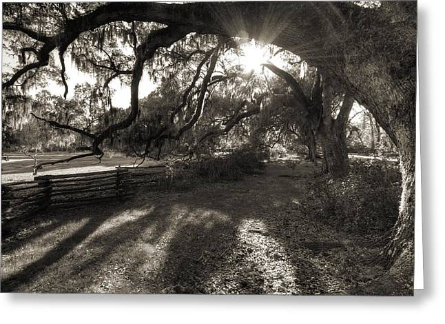 Moss Greeting Cards - Live Oak Tree with Spanish Moss Greeting Card by Dustin K Ryan