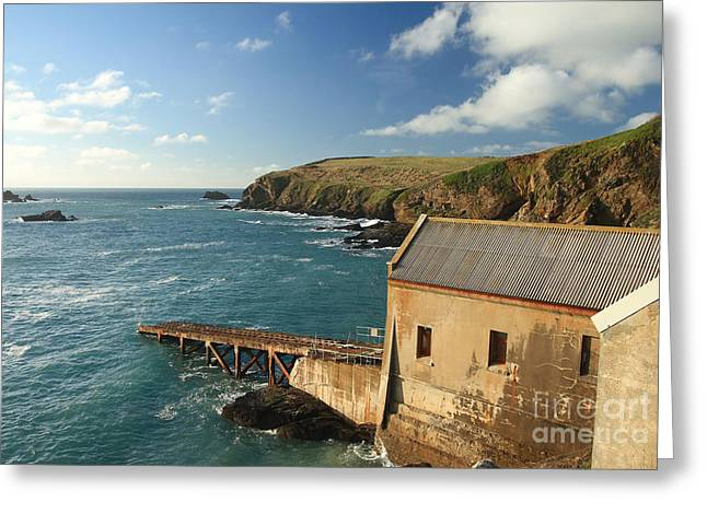 Lizard Point Greeting Card by Carl Whitfield