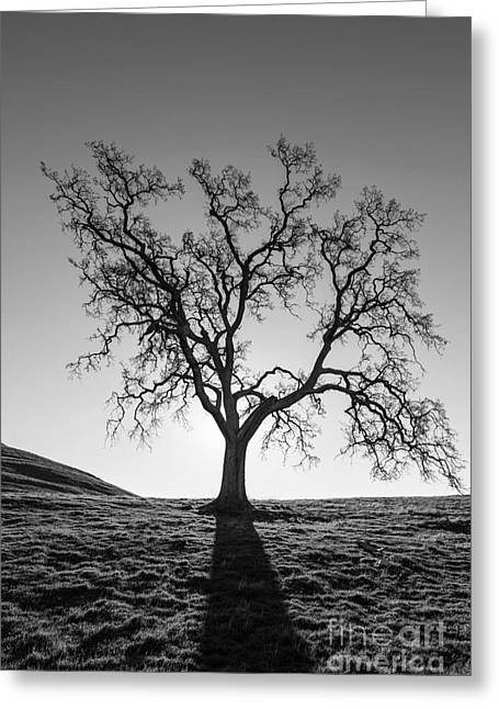 Gnarly Greeting Cards - Lone Oak Leafless Silhouette Greeting Card by Trekkerimages Photography