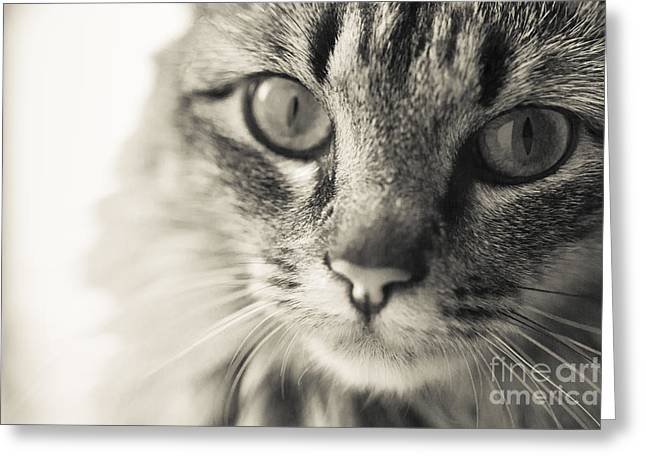 Recently Sold -  - Reflex Greeting Cards - Looking Into Me_184 Greeting Card by Andria Patino